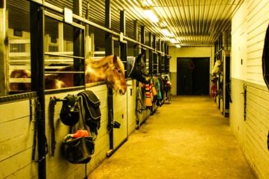 Några av hästarna vill ha frukost!